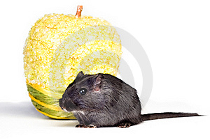 Mouse And Apple Royalty Free Stock Photo - Image: 18763785