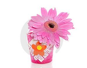 A Pink Gerbera Stock Photos - Image: 18782093