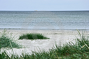 Green Grass On A Deserted Beach Stock Image - Image: 18789181