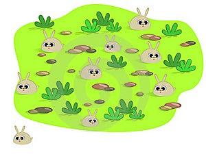 Cute Rabbits Stock Photo - Image: 18789290