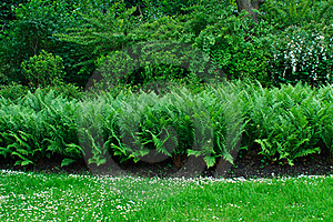 Ferns In A Park Royalty Free Stock Photo - Image: 18795155