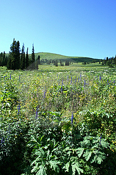 Meadow Stock Images - Image: 18796194