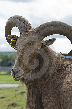 Antelope Royalty Free Stock Images - Image: 18800179