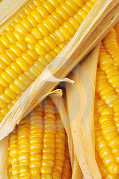 Sweet Corn Stock Photos - Image: 18800583