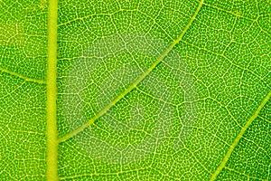 Leaf Background Royalty Free Stock Photo - Image: 18804995