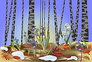 First Flowers In Spring Forest Illustration Royalty Free Stock Photo - Image: 18816735