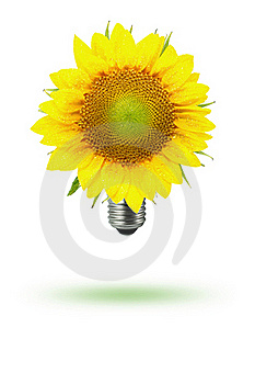 Eco-sun Flower Royalty Free Stock Photography - Image: 18823307