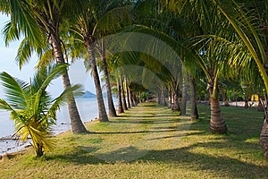 Long Palm Grove Royalty Free Stock Photo - Image: 18823915