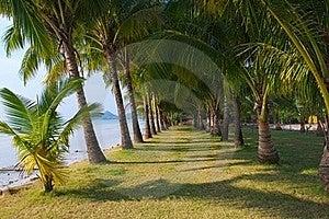 Long Palm Grove Royalty Free Stock Photo - Image: 18823915