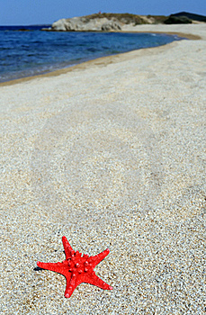 Red Sea Star On Beach Royalty Free Stock Photos - Image: 18833328