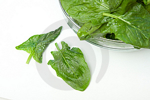 Spinach Isolated On White Stock Photography - Image: 18860512