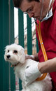 Vet examining a cute dog Stock Photography