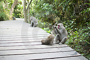 Interaction Of Monkey Mother And Son  Grooming Royalty Free Stock Photo - Image: 18875965