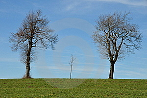 Three Trees At Horizon Stock Photography - Image: 18893832
