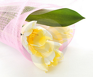 Tulips Bouquet Stock Photography - Image: 18896672