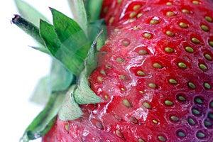 草莓。 宏指令 免版税图库摄影 - 图片: 1890617