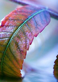 Leaf Stock Photos - Image: 1894093