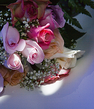 Roses In Spotted Sunlight Stock Photos - Image: 1897053