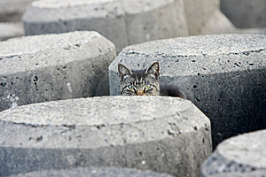 Peek-a-boo Stray Cat In Concrete Blocks Royalty Free Stock Images - Image: 18907649