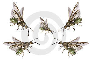 Green Ants Royalty Free Stock Photos - Image: 18915378