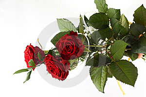 Rose Bouquet On White Background. Stock Photos - Image: 18916803
