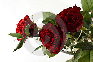 Rose Bouquet On White Background. Royalty Free Stock Photos - Image: 18916808