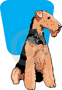 Airedale Terrier Stock Photo - Image: 18923610