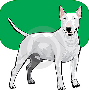 Bull Terrier Color Royalty Free Stock Images - Image: 18923719