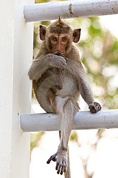 Monkeys Cute Sitting On A Steel Fence Royalty Free Stock Photography - Image: 18924277