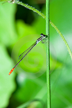 Damsel Fly Royalty Free Stock Photos - Image: 18932188
