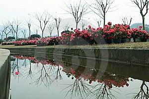 Azalea Royalty Free Stock Photos - Image: 18937108