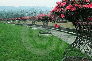 Azalea Royalty Free Stock Images - Image: 18937149
