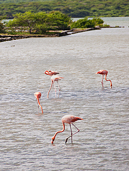 Flamingos Royalty Free Stock Photo - Image: 18938255