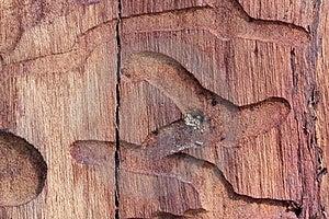 Wood Worm Path Royalty Free Stock Photos - Image: 18946798