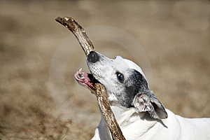 Doggy Royalty Free Stock Photos - Image: 18965278