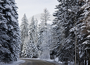 Winter Road Free Stock Images