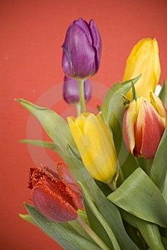 Tulips Royalty Free Stock Photo - Image: 18969135