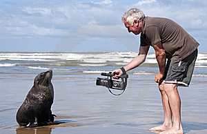 Man On Beach With A Seal Royalty Free Stock Photo - Image: 18971295