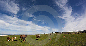 Green Field Stock Photography - Image: 18972362