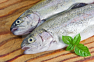 Trout Royalty Free Stock Photography - Image: 18981797