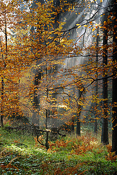Forest Royalty Free Stock Images - Image: 18983339
