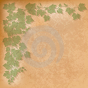 Grunge Illustration With Grape Leaves Stock Photography - Image: 18988352
