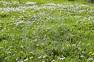 Meadow Royalty Free Stock Photos - Image: 18989108