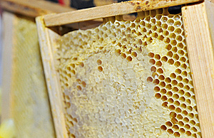 Honeycomb In The Wooden Frame Stock Photos - Image: 18990613
