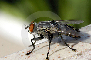 Monster Fly Free Stock Image