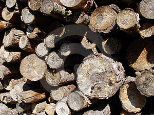 Woodpile Fotografia Royalty Free