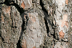 A Trees Bark - Horizontal Stock Image