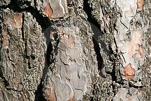 A trees bark - horizontal Stock Image