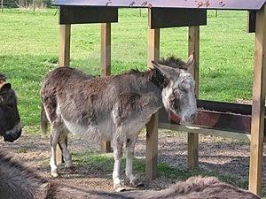 Donkey Free Stock Photos