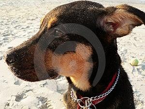 Lost, Sad Puppy Stock Photos